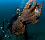 Открытие выставки фотографий подводного мира