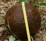Краеведы нашли бомбу XIX века